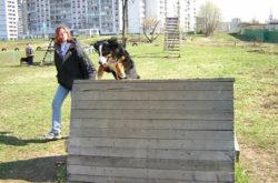 Дрессировка с собакой на площадке