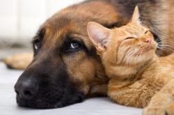 Собаки и кошки в России посчитаны