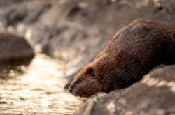 Впервые животные умерли от COVID-19