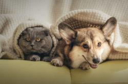 Поиск домашних животных: запущен новый сервис