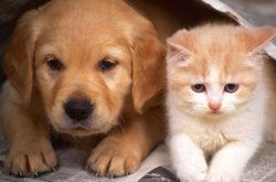 Кошки и собаки на даче могут попасть под запрет